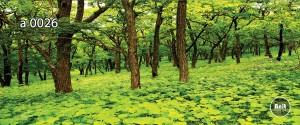 عکس درخت رادیاتور آنیت