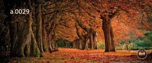 عکس پاییز رادیاتور طرح دار