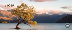 عکس درخت رادیاتور طرح دار