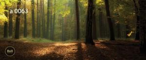 عکس جنگل رادیاتور آنیت
