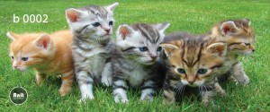 عکس بچه گربه رادیاتور شیشه ای
