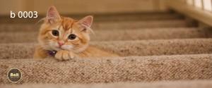 عکس گربه رادیاتور طرح دار