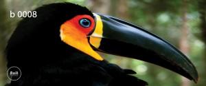 عکس پرنده رادیاتور طرح دار