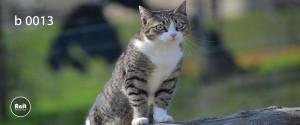 عکس گربه رادیاتور رنگی