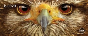 عکس عقاب رادیاتور شیشه ای