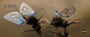 عکس پرنده رادیاتور شیشه ای