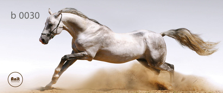 عکس اسب رادیاتور رنگی