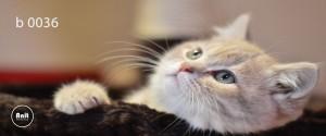 عکس گربه رادیاتور چاپ دار
