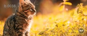 عکس گربه رادیاتور شیشه ای