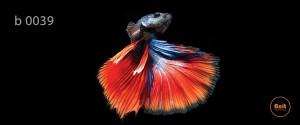 عکس ماهی رادیاتور طرح دار